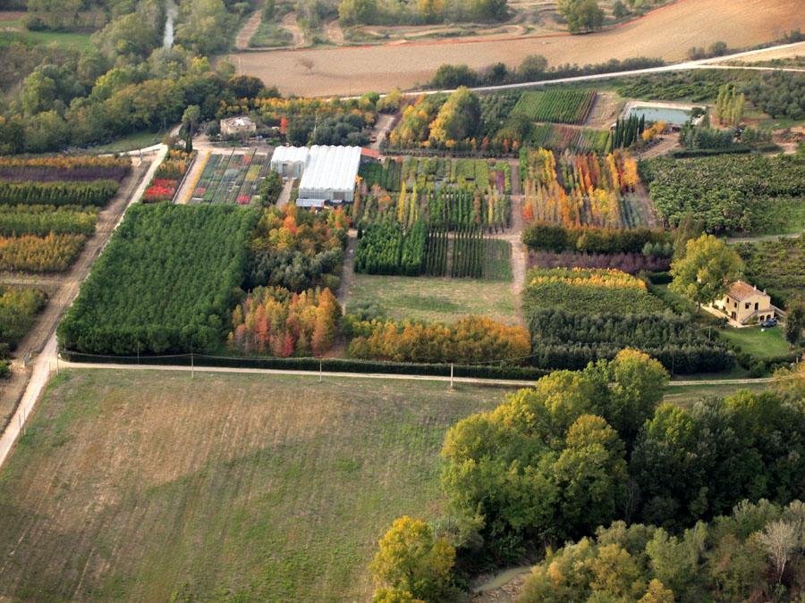 Martinelli vivai arboree alberi arbustive cespugli for Cespugli giardino